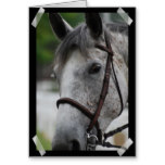 aCute Appaloosa Horse Greeting Card