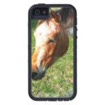 Appaloosa Horse Cover For iPhone 5