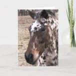 Appaloosa Stallions Greeting Card