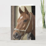 Arab Horses Greeting Card