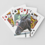 Black Warmblood Deck of Cards