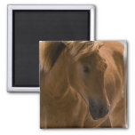 Chestnut Horse Design Square Magnet