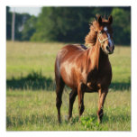 Chestnut Horse Standing Canvas Print