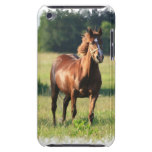 Chestnut Horse Standing iTouch Case iPod Touch Covers