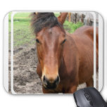 Chestnut Thoroughbred Horse Mouse Pad