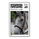 Cute Appaloosa Horse Postage Stamp