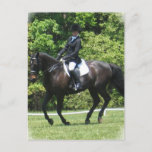 Dressage Tests Postcard