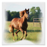 Galloping Chestnut Canvas Print