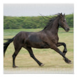 Galloping Friesian Poster