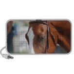 Gorgeous Chestnut Show Horse Travel Speaker