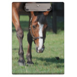 Gorgeous Quarter Horse Clipboard