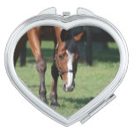 Gorgeous Quarter Horse Compact Mirror