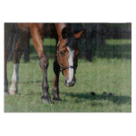 Gorgeous Quarter Horse Cutting Board