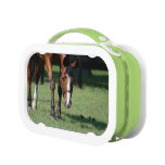Gorgeous Quarter Horse Lunch Box