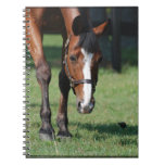 Gorgeous Quarter Horse Notebook