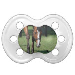 Gorgeous Quarter Horse Pacifier