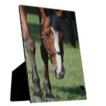Gorgeous Quarter Horse Plaque