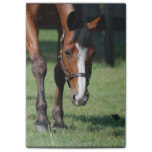 Gorgeous Quarter Horse Post-it Notes