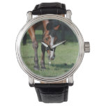 Gorgeous Quarter Horse Wristwatch