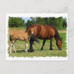 Grazing Horse Family Postcard