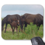 Horse Family Grazing Mouse Pad