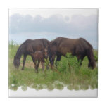 Horse Family Grazing  Tile