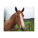 Lovable Quarter Horse Canvas Print