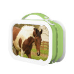 Paint Horse Lunch Box