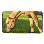 Palomino Horse Grazing iTouch Case