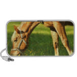 Palomino Horse Grazing Portable Speakers