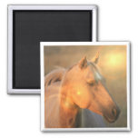 Palomino Horse in Light Square Magnet