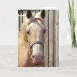 Palomino Pony Greeting Card
