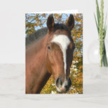 Quarter Horse Greeting Card