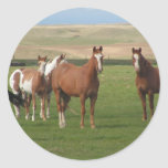 Quarter Horse Herd Stickers