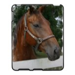 Quarter Horse Photo iPad Case