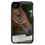Quarter Horse Photo iPhone Case