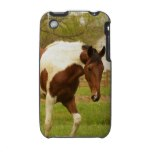 Roaming Paint Horse iPhone 3G Case