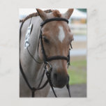 Roan Pony Postcards