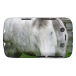 Sleepy Appaloosa Blackberry Case