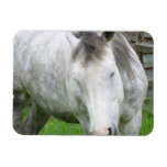 Sleepy Appaloosa Flexible Magnet