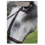 Sweet Appaloosa Horse Clipboard