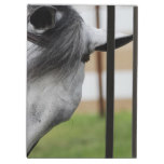 Sweet Appaloosa Horse iPad Air Cover
