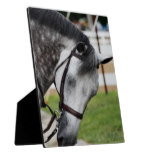 Sweet Appaloosa Horse Plaque