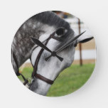 Sweet Appaloosa Horse Round Clock
