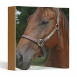 Sweet Chestnut Horse Binder