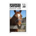 Sweet Quarter Horse Postage Stamp