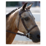 Sweet Roan Pony Plaque