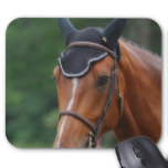 Warmblood Horse  Mouse Pad