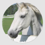 White Arabian Horse Sticker