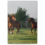 Wild Horse Roundup Post-it® Notes